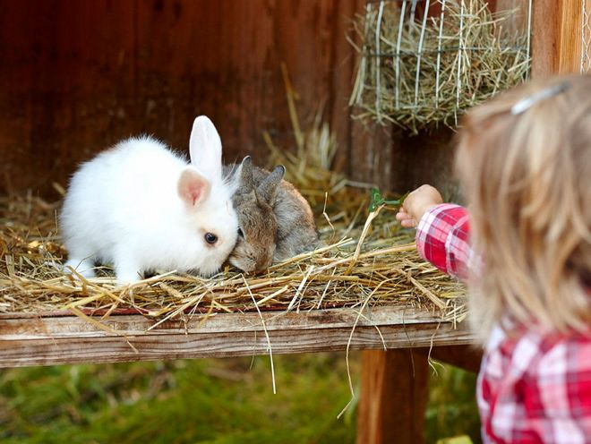 Feeding rabbits during a family holiday in the Hotel Hochschhober on the Turracher Höhe
